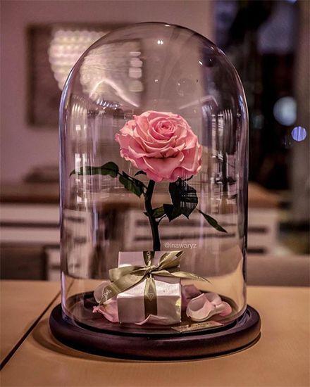 Hoa hồng vĩnh cửu