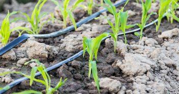 Bảng báo giá hệ thống tưới nhỏ giọt cho cây trồng