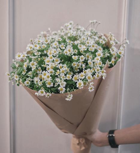Hoa cúc dại thích hợp tặng sinh nhật bạn bè thân thiết