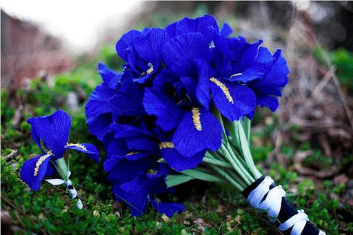 Vẻ đẹp của hoa diên vĩ
