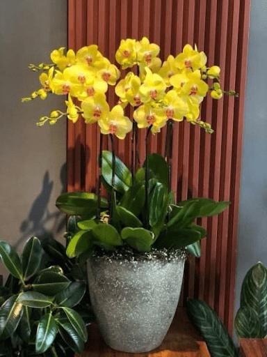Hoa lan tượng trưng cho sức khỏe, tài lộc