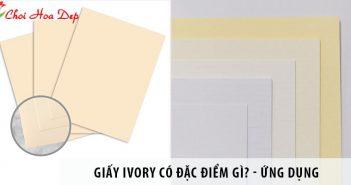 Giấy Ivory có đặc điểm gì? Ứng dụng của giấy Ivory trong in ấn